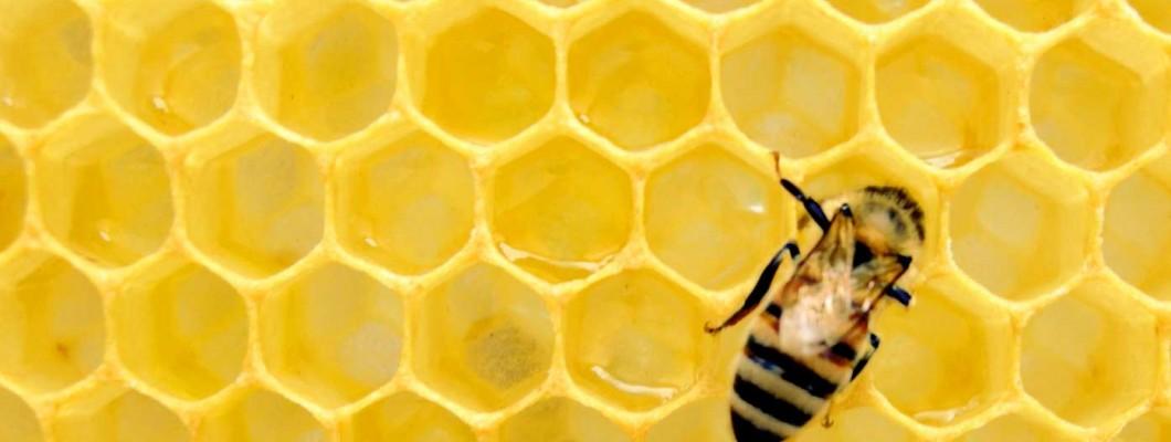 Beekeeping - A Taster