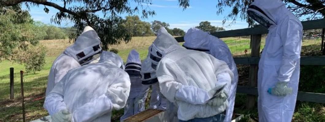 Bee-ginning Beekeeping
